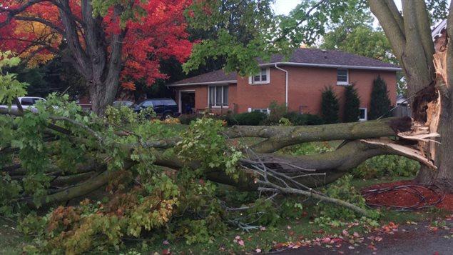Un arbre arraché à la suite à une violente tornade