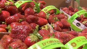 Paniers de fraises de l'île d'Orléans