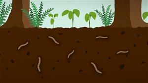 D'où proviennent les vers de terre qui grouillent dans le sol?