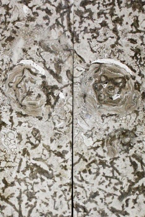 Des fossiles sont incrustés dans la pierre de Tyndall.