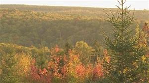 Difficile d'assurer la pérennité de la biodiversité lorsque l'industrie forestière est l'un des moteurs économiques.