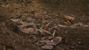 Une compagnie de la Côte-Nord utilise les résidus de la mer, tels les carapaces de crabe, pour en faire du compost.