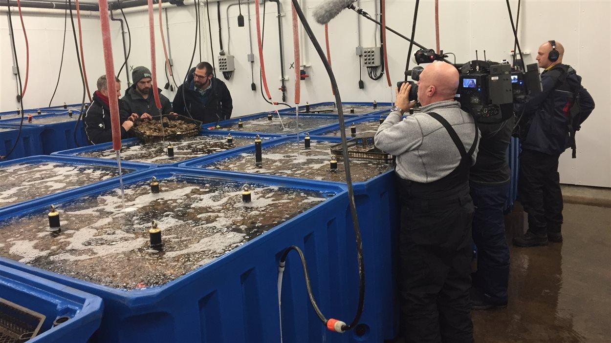La famille Mallet cultive des huîtres depuis 40 ans