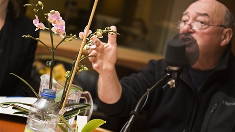 Pierre Gingras et son orchidée