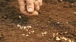 L'essentiel de notre alimentation provient d'une simple semence.