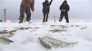 Pêche blanche à l'éperlan à l'embouchure de la rivière Rimouski.