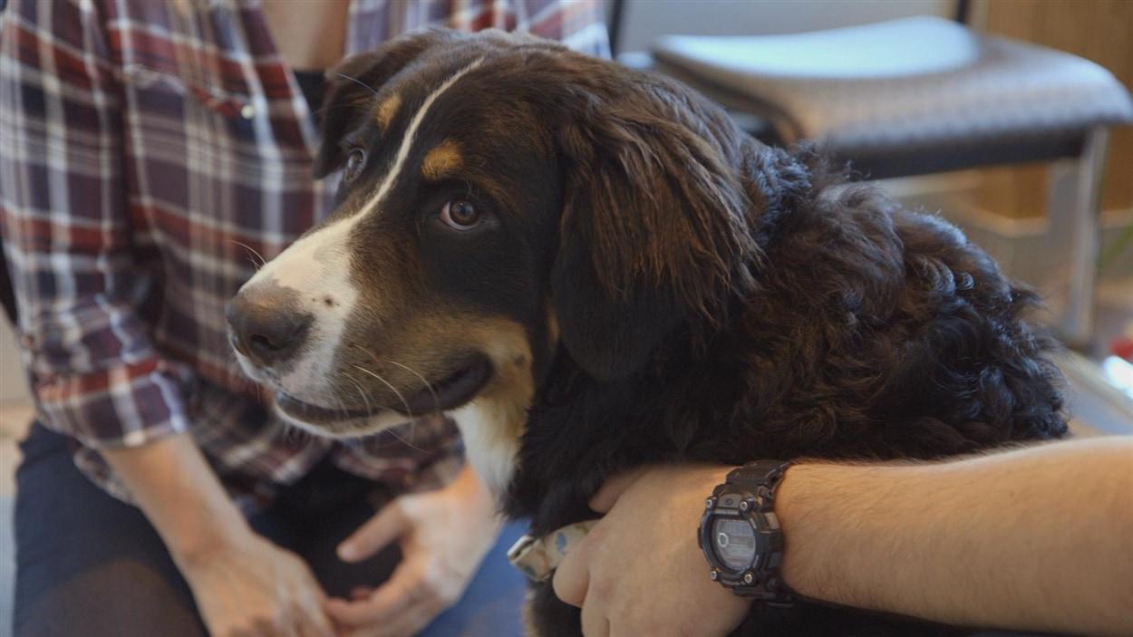 Berney, le chien pour post-traumatisé de guerre