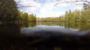 La première mare éphémère répertoriée comme telle est située à Saint-Marcellin, près de Rimouski.